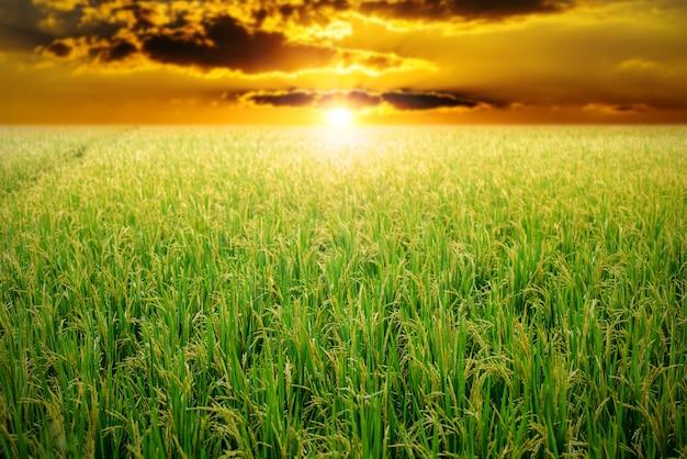 日の出の空に緑の田んぼ