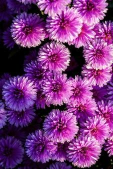 Закройте красивый цветок лаванды и резак в саду природы, летние цветы