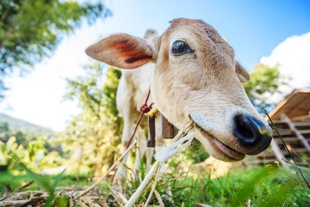 自然の中で変な顔の牛