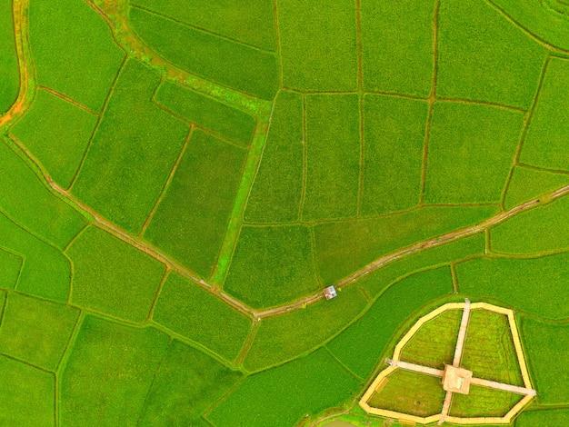 Карта рисовой фермы, вид с высоты птичьего полета