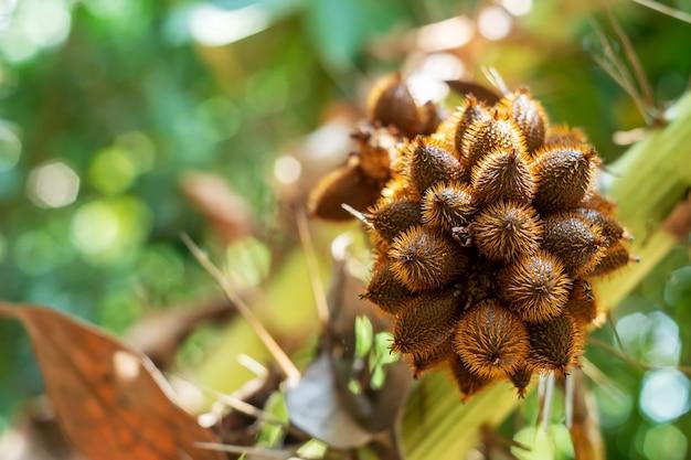 Тайский личи из дерева на размытом фоне боке