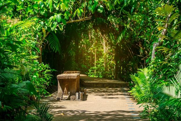 日光の下で散歩道と木の葉自然