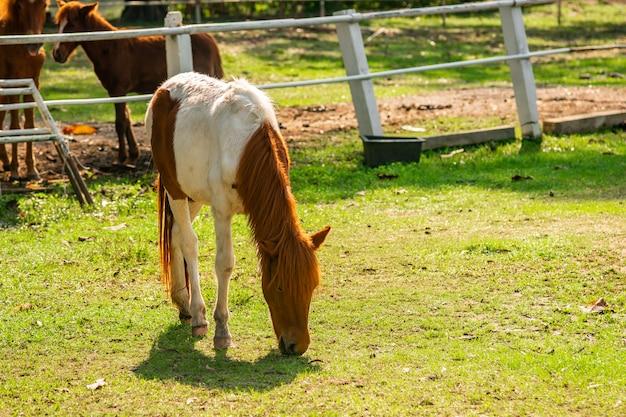 馬は草を食べています