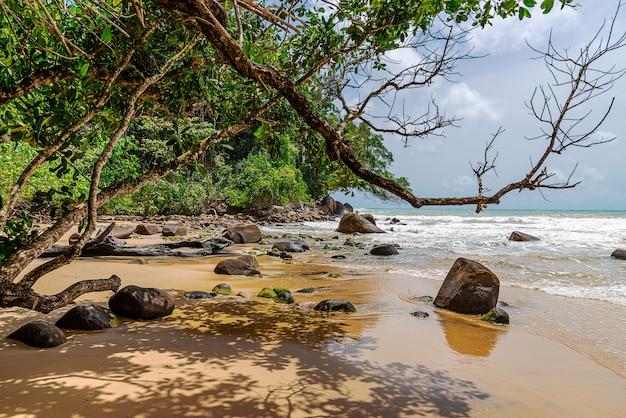 白い砂浜と木と夏の季節の空とビーチ