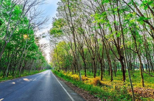 Пара каучукового дерева, плантации латекса и каучука
