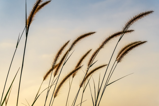 Цветок травы с цветом неба закат