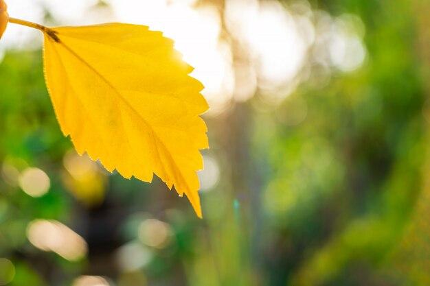 光ボケ自然の枝と黄色の葉の自然