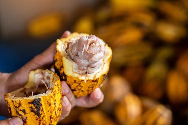 Какао-бобы и какао-стручок на деревянной поверхности