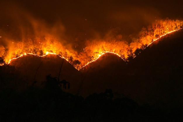火災。山火事、煙と炎で燃えている松林。