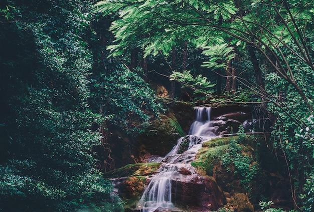 自然公園内のストリームの軟水、熱帯雨林の美しい滝