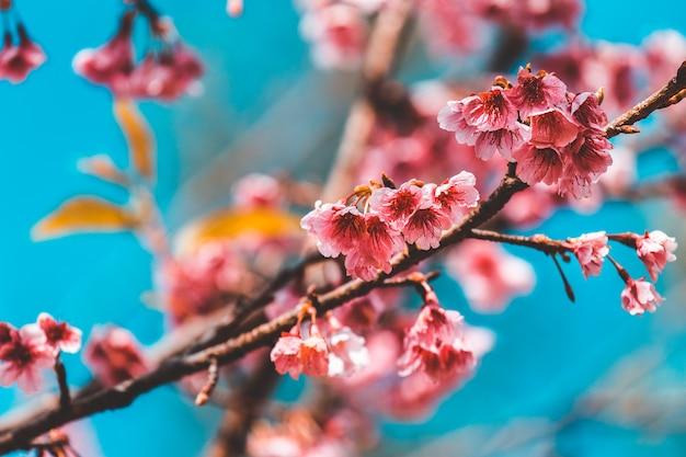桜とさくら壁紙