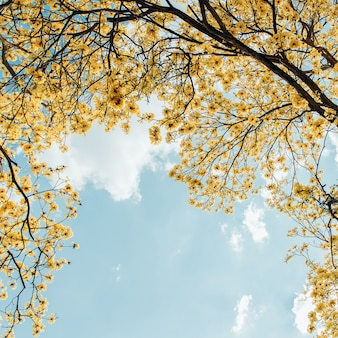 黄色の花が咲くビンテージスタイル