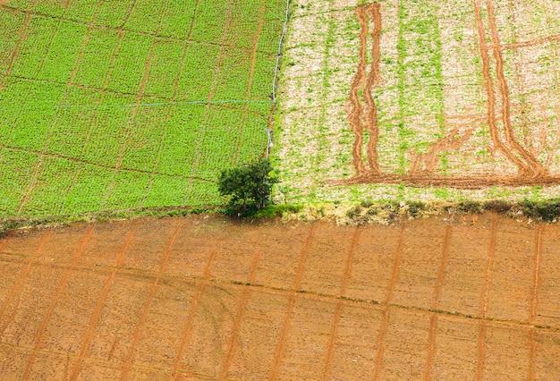 上面図。日没で彼のトウモロコシ畑に立っている農夫