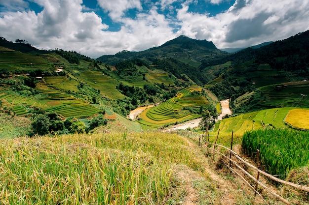 Рисовые поля на террасе в сезон дождей в му цан чай, йен бай