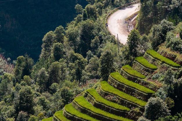 ベトナム北西部の米田