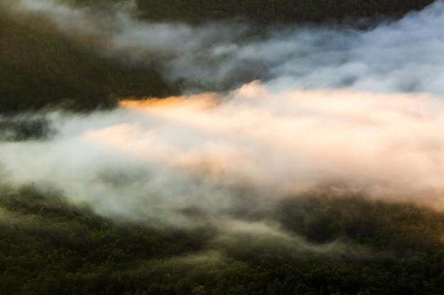 流行に敏感なビンテージレトロなスタイルのモミの森と霧の風景
