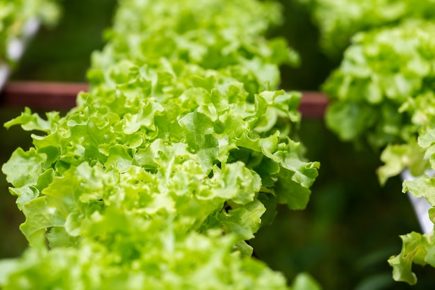 農業野菜水耕栽培の有機農場。