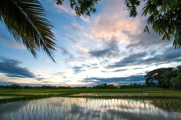 Рисовое поле на закате, таиланд