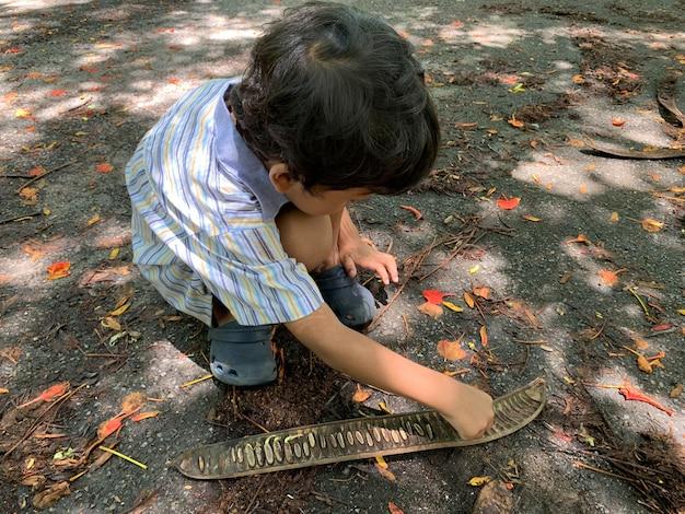 アジアの少年たちは木から落ちる種を遊んでいます