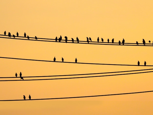 ワイヤーと夕焼け空に座っているマイナスの鳥