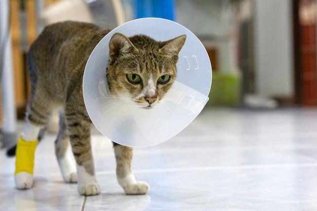 傷口をなめないように猫を保護するために獣医の頭に病気の猫がいます。