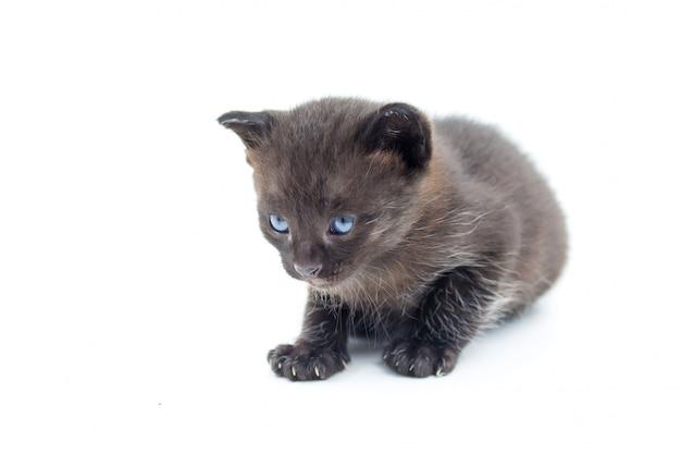 分離された黒い子猫