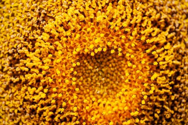 ひまわり花粉の背景をクローズアップ。
