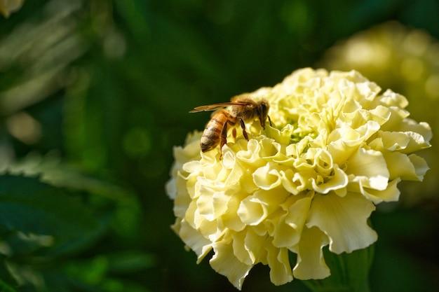 花の小さな蜂