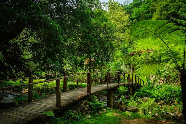 東南アジアの熱帯雨林の木製橋