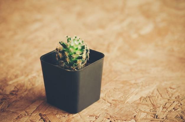 サボテン鉢植えで趣味を飾る