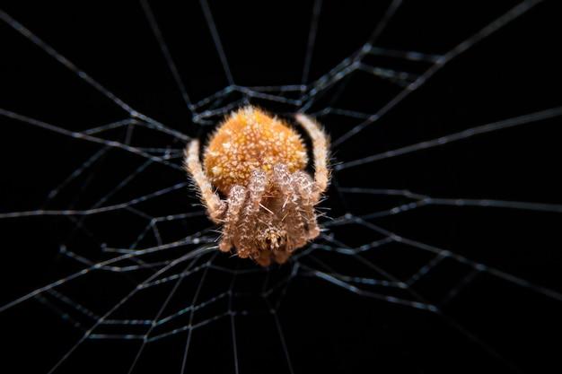 マクロは、クモの巣にクモのクローズアップ