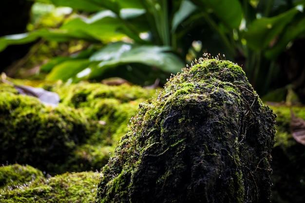 コケに覆われた石、コケに覆われた木の幹とそのルートの牧歌的な森林景観
