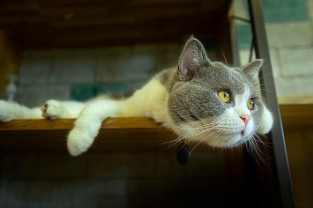家の中のプラットフォームで寝ているかわいい猫