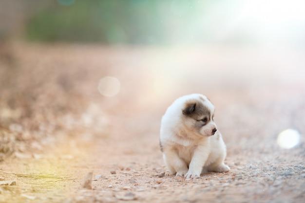公園の土の道に一人で座っている肖像画の子犬犬。