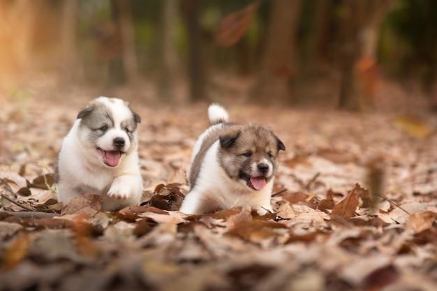 秋の野外で一緒に遊ぶ子犬犬。