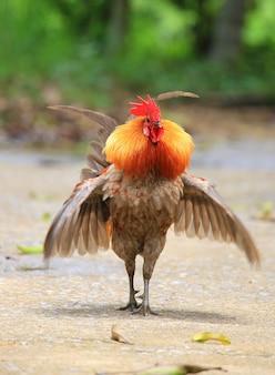 自然の背景に美しい鶏