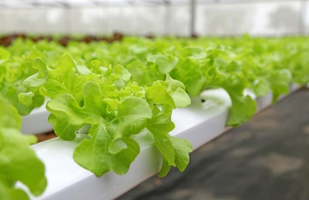 水耕野菜農場