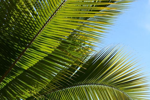 白い空の背景とココナッツの葉