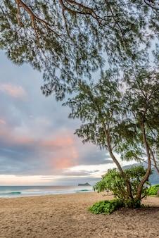 ハワイ州オアフ島の風上側にあるワイマナロビーチ、ラビットアイランド、アイアンウッドの木