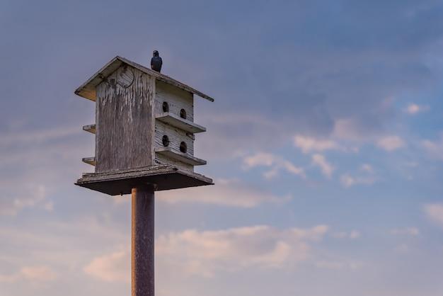 青い空と雲と木の巣箱の上に腰掛けて鳥