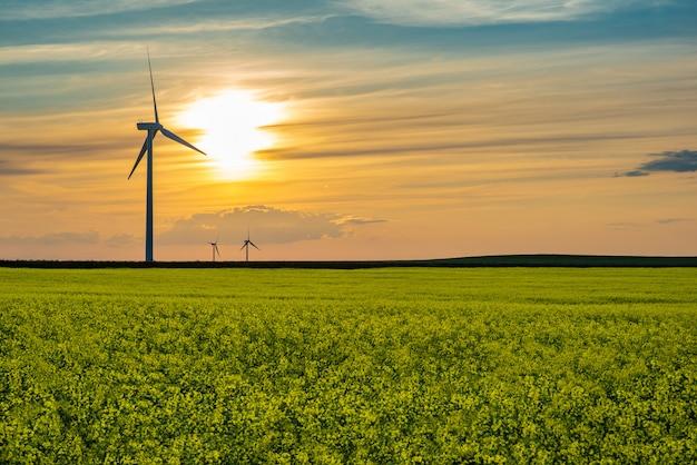 カナダ、サスカチュワン州の大草原のキャノーラ畑の風力タービンに沈む夕日