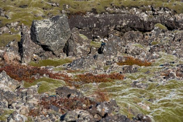 アイスランドの溶岩畑におけるモス岩の岩石流出