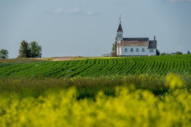 歴史的なザイオンルーテル教会とサスカチュワン州カイル近くの墓地。前景には菜種畑とレンズ豆畑があります。