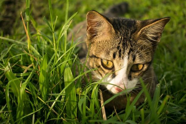 猫はあなたに夢中に待っている草の中に隠れている明るい黄色の目であなたを探しています。