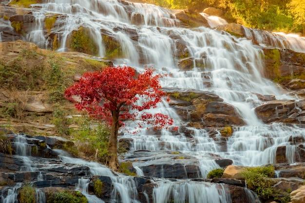 熱帯雨林の美しい滝