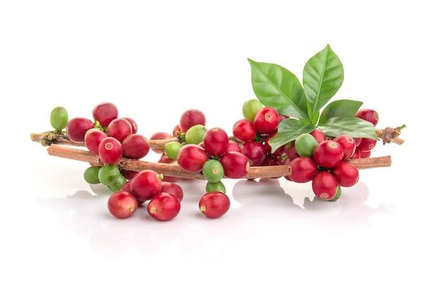 白い背景の上の葉と新鮮なコーヒー豆
