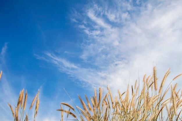 春または夏の牧草地の草と後ろの青い空と抽象的な自然の背景