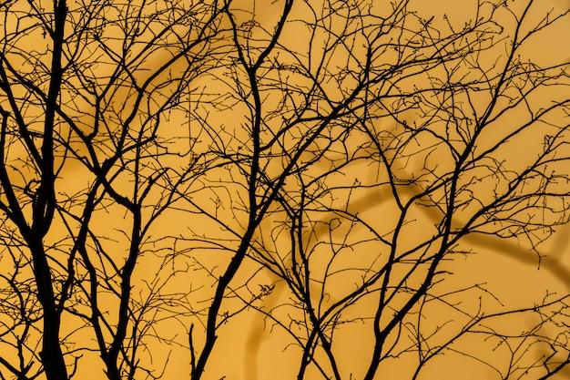 Силуэт ветвей на закате