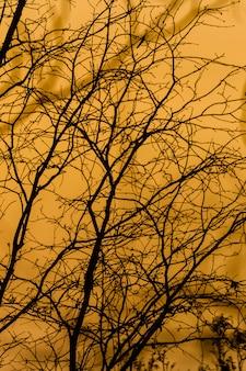 日没時の枝のシルエット