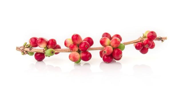 白の葉と新鮮なコーヒー豆